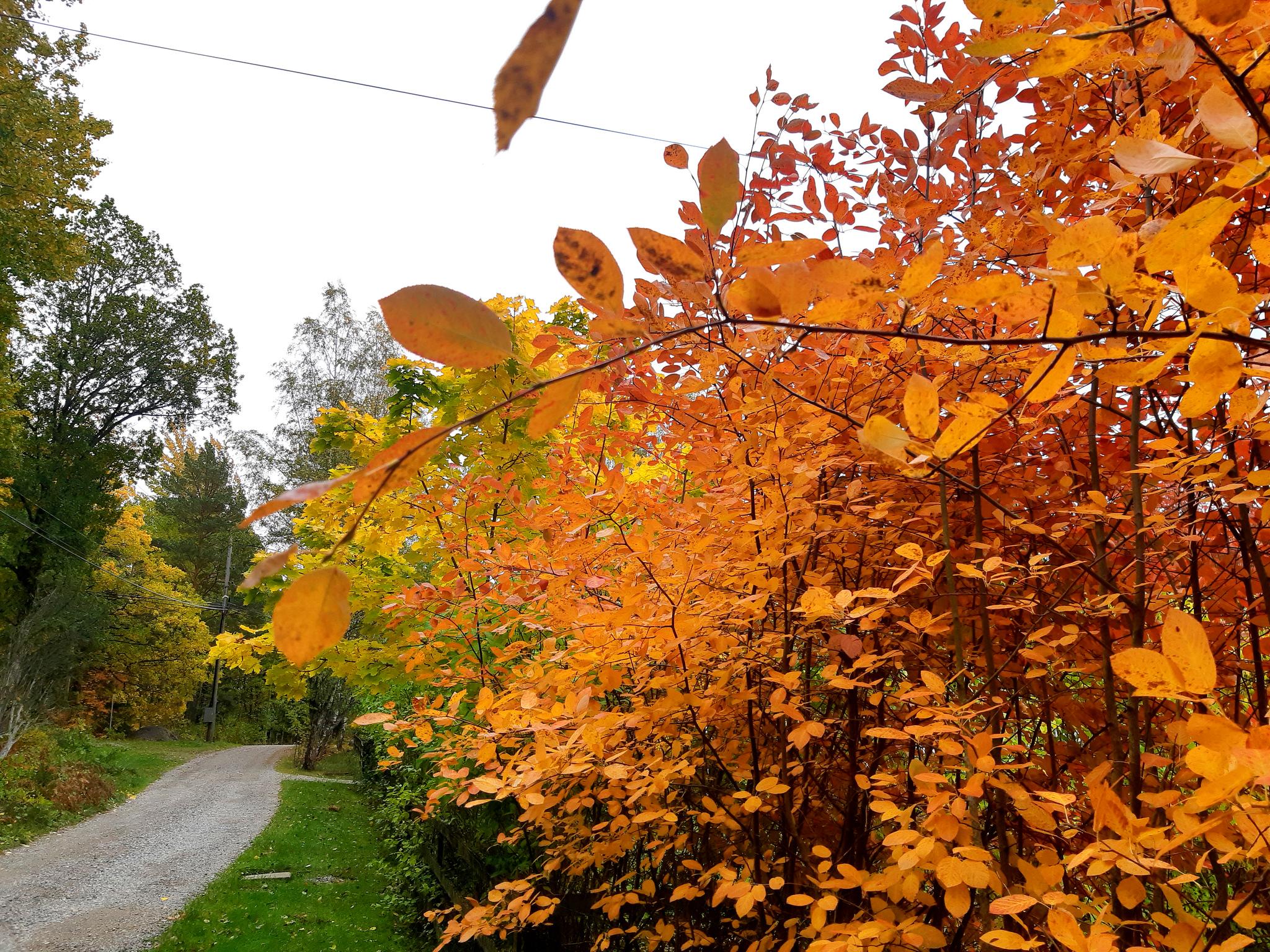 Listan för hösten